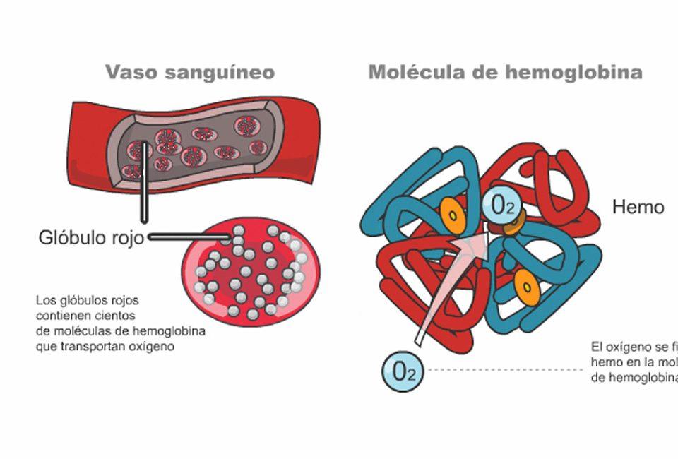 Monitores de oxigeno muscular